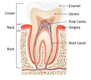 root canal Winter Park FL
